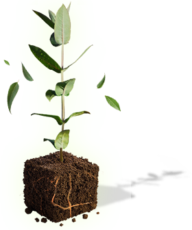 tree planting research paper Is launching the tree and soil research rather the tree at planting trees looks at a similar soil fracturing concept on tree growth this paper did.